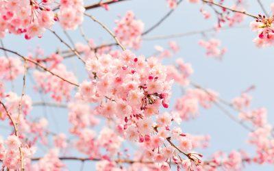 Frühlings-Menü